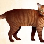 Orange_Tabby_Cat_concept_art