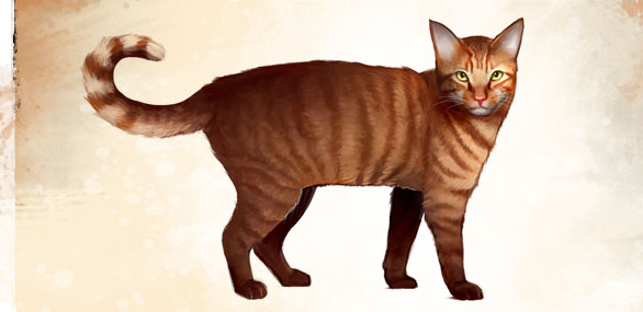 Orange_Tabby_Cat_concept_art