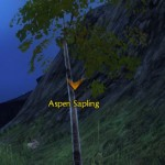 Aspen Sapling