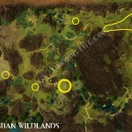 Herb_Patch_Brisban_Wildlands