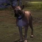 Krytan-Drakenhound-gw2-ranger-pets