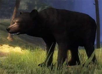 juvenile_black_bear_gw2_ranger_pets