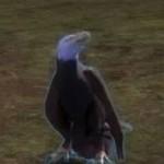 juvenile_eagle_gw2_ranger_pets