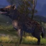 juvenile_hyena_gw2_ranger_pets