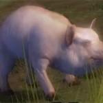 juvenile_pig_gw2-ranger_pets