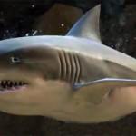 juvenile_shark_gw2_ranger_pets