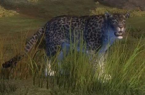 juvenile_snow_leopard_gw2_ranger_pets