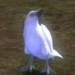 juvenile_white-raven_gw2_ranger_pets
