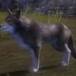 juvenile_wolf_gw2_ranger_pets