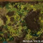 Mimosa_Sapling_Brisban_Wildlands