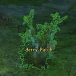 berry_patch_gw2_gathering