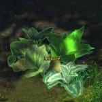 lettuce_gw2_gathering