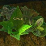 cabbage_gw2