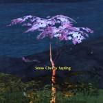 snow_cherry_sapling