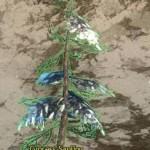 Cypress_Sapling