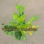 Winter_Root_Vegetables